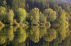 Autumnal beech forest, water reflection in the pond Stock Images
