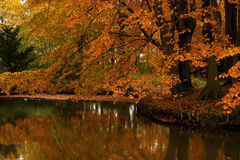 Autumnal beech at the pond Stock Photo
