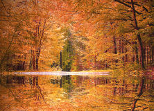Autumnal beech tree forest with a little biotope stock image