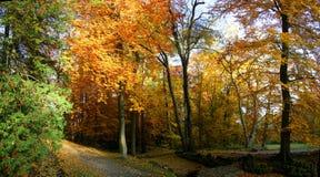 Autumnal beech trees Stock Photo