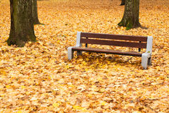 Autumnal bench Royalty Free Stock Images