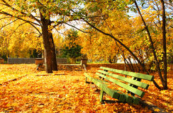 Autumnal bench. Empty green bench in the autumnal park Royalty Free Stock Image