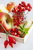 Autumnal berries - rosehip, rowan and apple Stock Photography