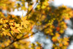 Autumnal blurred background Royalty Free Stock Photography