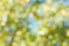 Autumnal bokeh. Abstract background. Royalty Free Stock Photo
