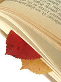 Autumnal bookmarks. Colorful autumnal leaves between book pages with ancient Latin text, as a bookmarks Royalty Free Stock Images