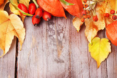 Autumnal border. Royalty Free Stock Photos