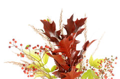 Autumnal bouquet Royalty Free Stock Photography