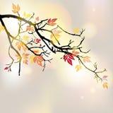 Autumnal branch Royalty Free Stock Photos