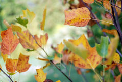 Autumnal branch royalty free stock images