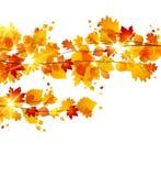 Autumnal Stock Photos