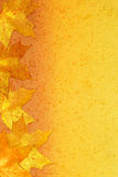 Autumnal bright background Royalty Free Stock Photos