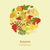 Autumnal bright leaf background vector Stock Image