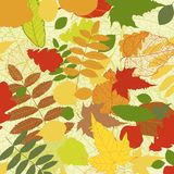 Autumnal bright leaf background vector Royalty Free Stock Photo