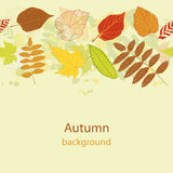 Autumnal bright leaf seamless vector Royalty Free Stock Photography