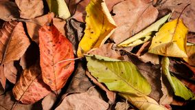 Autumnal brighty leaves. Pattern background. Vertical composition Royalty Free Stock Photos