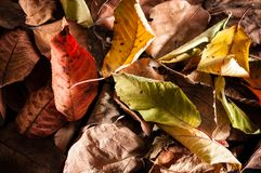 Autumnal brighty leaves. Pattern background. Horizontal composition Royalty Free Stock Image