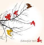 Autumnal brunch Stock Images