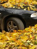 Autumnal car. The car is buried in the fallen autumnal leaves stock photos