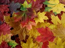 Autumnal carpet Stock Photography