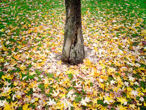 Autumnal carpet royalty free stock photo