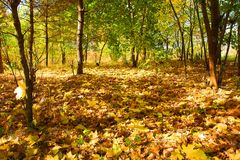 Autumnal carpet Royalty Free Stock Images