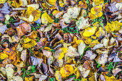 Autumnal carpet Royalty Free Stock Photography