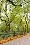 Autumnal Central Park Stock Photography