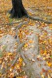 Autumnal Central Park Royalty Free Stock Photos