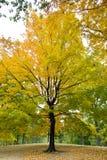 Autumnal Central Park Stock Images