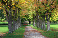 Autumnal chestnut alley in the park Royalty Free Stock Image