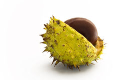 Autumnal chestnut with half open shell Royalty Free Stock Photography