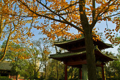Autumnal Chinese Temple Stock Photo