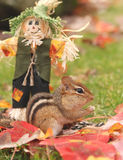 Autumnal chipmunk. Little chipmunk sits with a scarecrow among colorful autumn leaves Royalty Free Stock Images