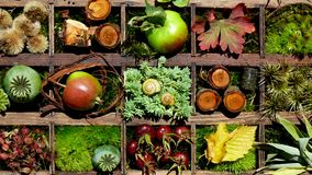 Autumnal Collage. Autumn foliage, apples, hipp etc. in a letter case Royalty Free Stock Photography