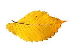 Autumnal color leaf Royalty Free Stock Photography