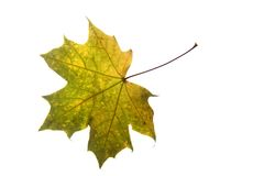 Autumnal color leaf Royalty Free Stock Images