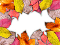 Autumnal color leaves frame isolated on white background Stock Images