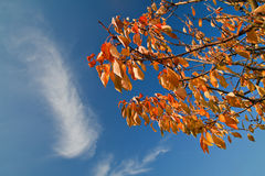 Autumnal colored leaves Stock Images