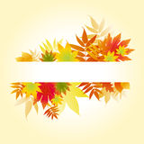 Autumnal colored leaves. On white background Stock Photography