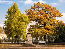 Autumnal colored leaves in Rostock Stock Photo