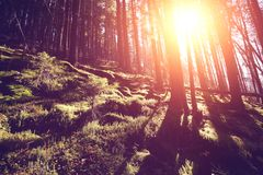 Autumnal colorful forest at sunrise. With sun rays Royalty Free Stock Images