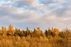 Autumnal colorful forest under blue sky with clouds Stock Photos