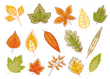 Autumnal colorful isolated leaves Royalty Free Stock Images