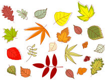 Autumnal colorful leaves Royalty Free Stock Photo