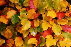 Autumnal Colorful Leaves Stock Photo