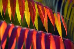 Autumnal colorful plants outdoors Stock Photos