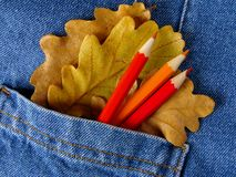 Autumnal colors Stock Image