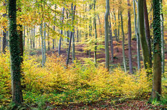 Autumnal colors Stock Images