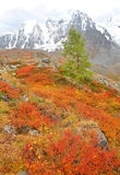 Autumnal colors in Altai Mountains Stock Photography
